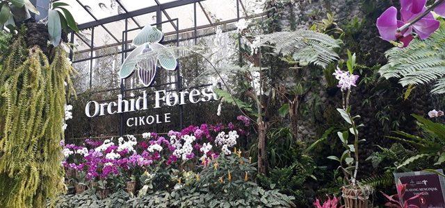 Taman Orchid Forest Cikole, Lembang-Bandung